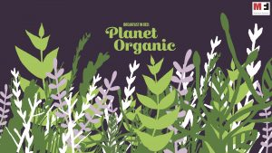 Breakfast in Bed: Planet Organic
