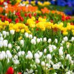 Spring Flower Show: Gardens of the Rainbow