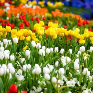 Spring Flower Show: Gardens of the Rainbow