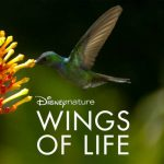 Environmental Film Series: Disneynature: Wings of Life