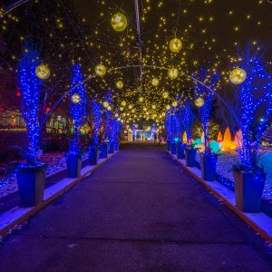 Holiday Magic! Winter Flower Show and Light Garden...