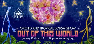 Orchid and Tropical Bonsai Show: Out of This World