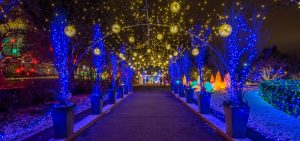 Festive Nights of Winter Lights