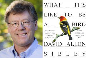 David Sibley Virtual Lecture