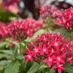 Summer Flower Show: Back in Bloom