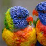 Love Bird Virtual Trivia with Wigle Whiskey